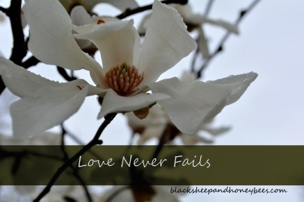 love never fails_edited-1